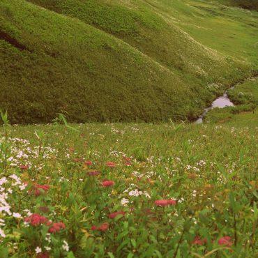 Nagaland Mystery Diaries – Dzukou Valley